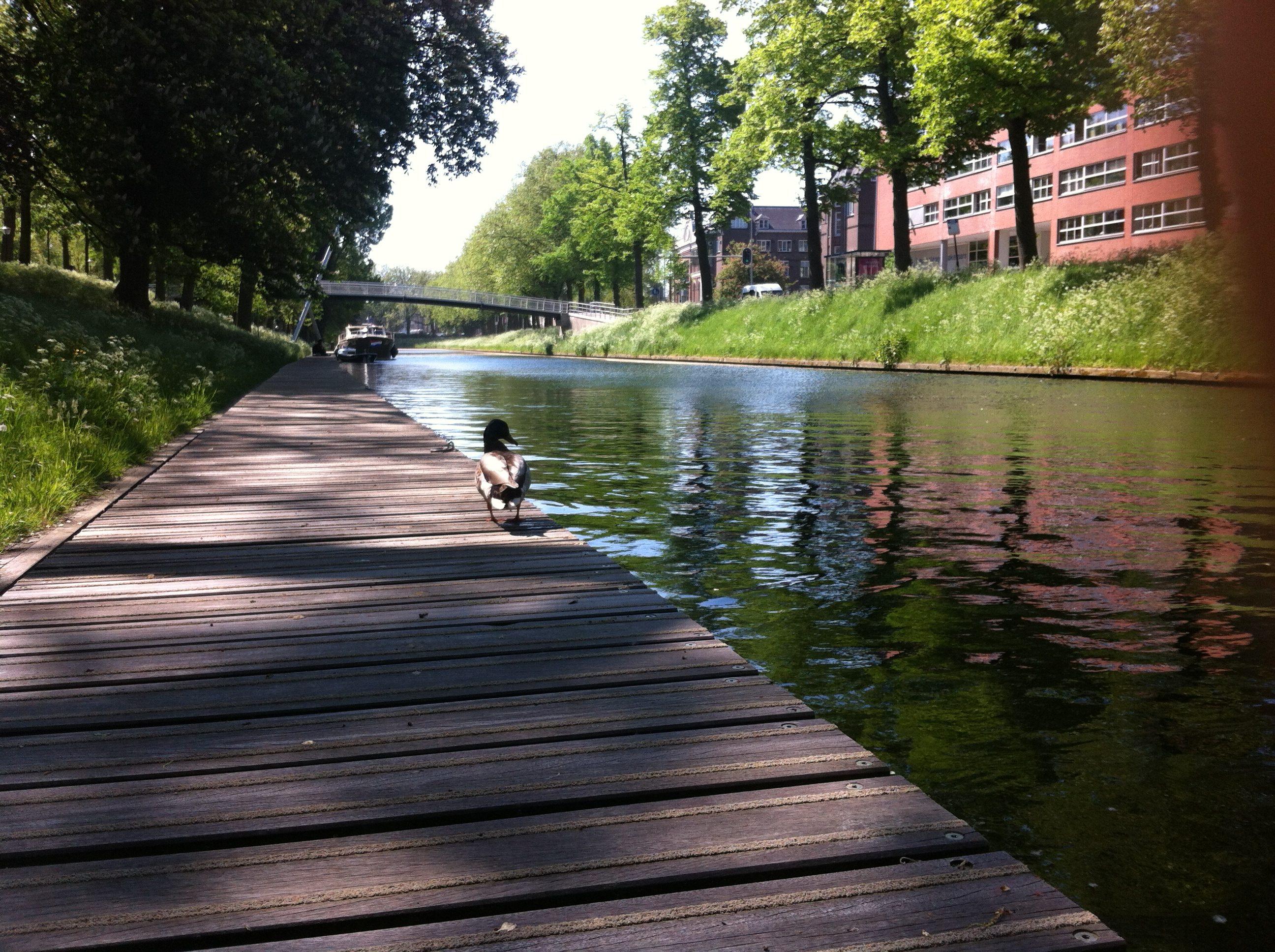 Yvonderweg - Groeien doe je elke dag - Blogpost typen op steiger aan het water met eend