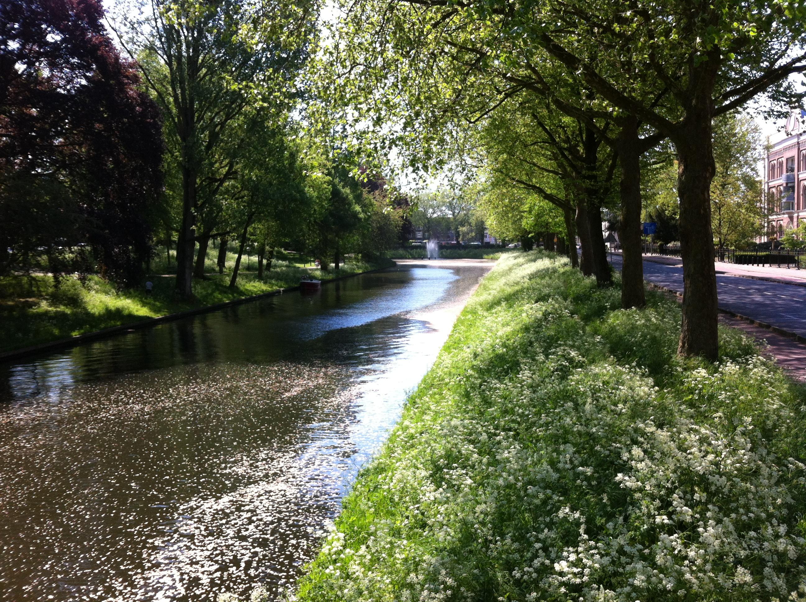 Yvonderweg - Groeien doe je elke dag - Groene bomen langs de gracht in Utrecht