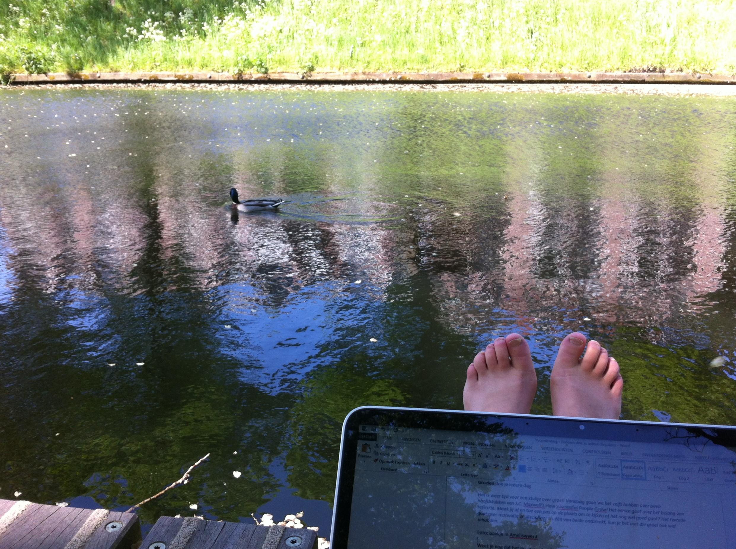 Bloggen in het park, eendje komt langs