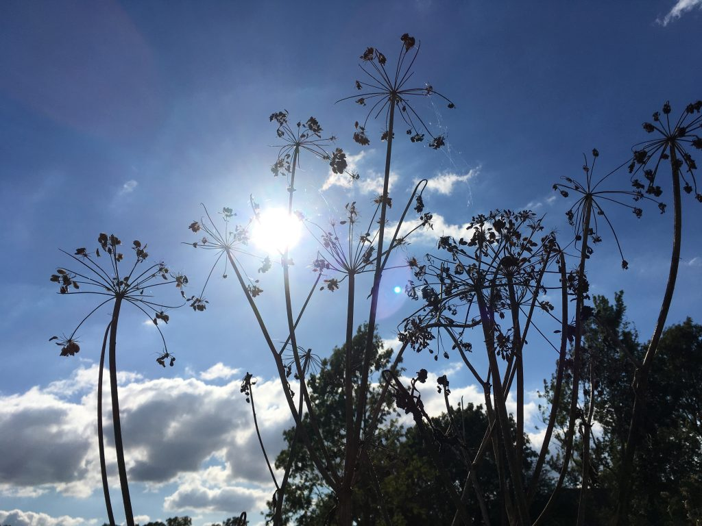 Zonneschijn door de planten, lopend door de Amelisweerd.