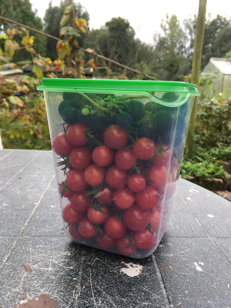Tomaten en druiven uit eigen moestuin/kas.