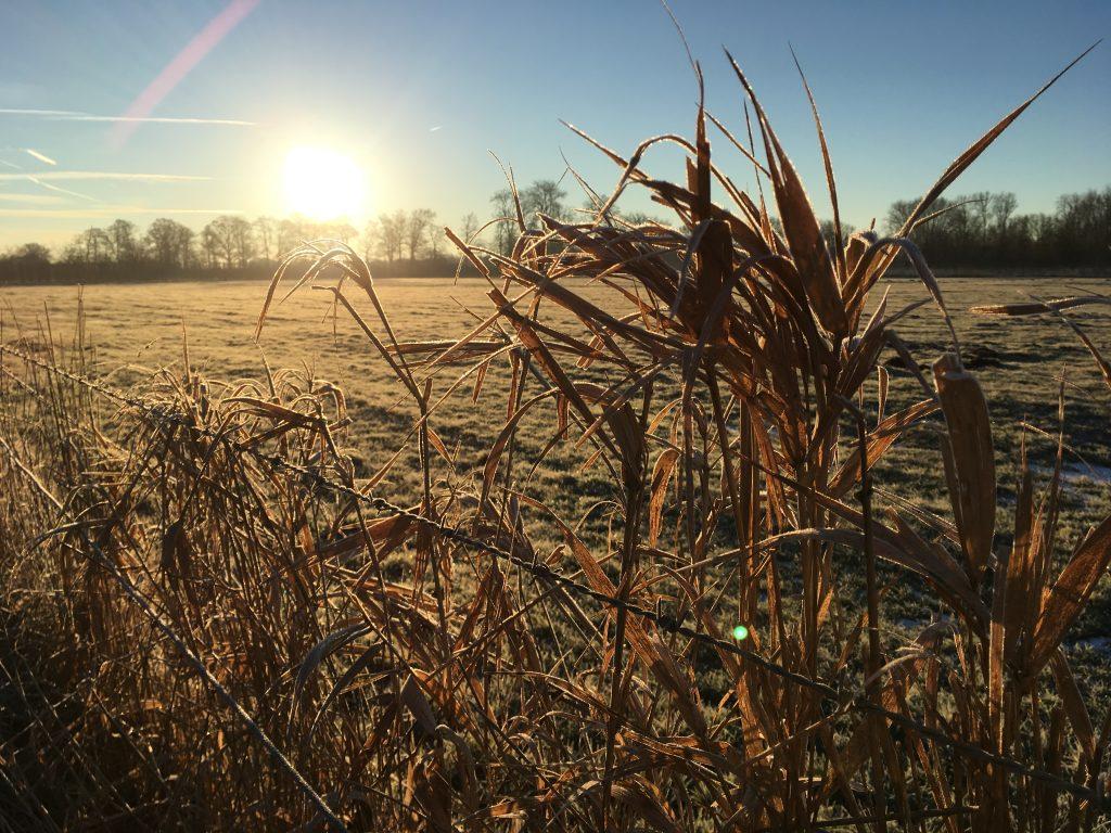 Landgoed Amelisweerd bevroren riet winterlandschap