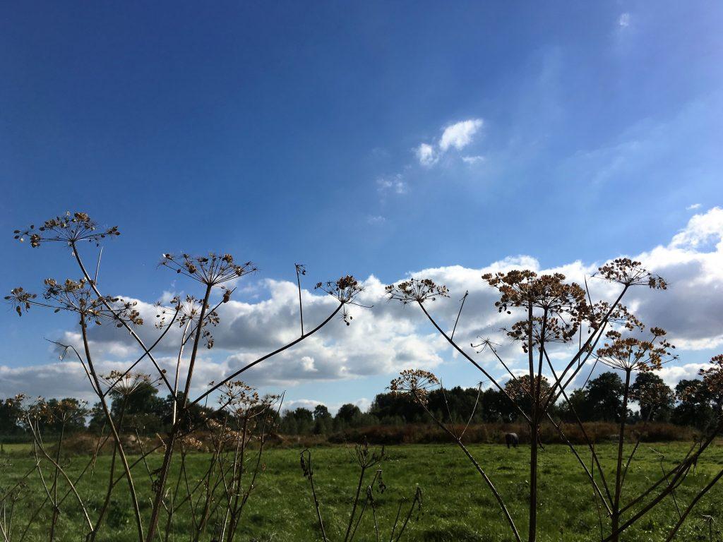 Prachtige blauwe lucht in de Amelisweerd.